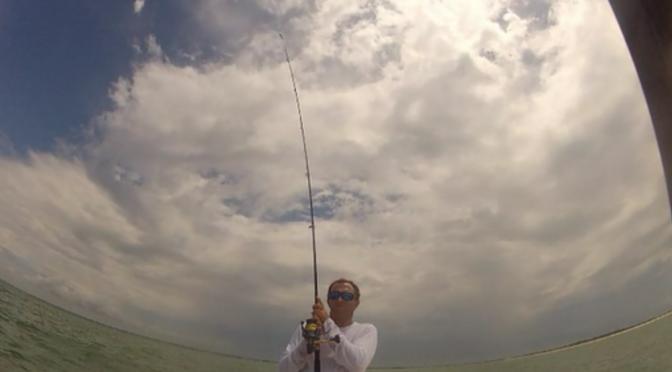 Shark Fishing 2011