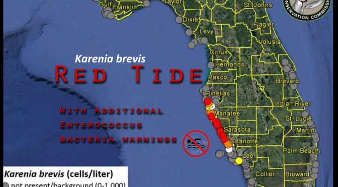 Wastewater Triggered Red Tide (K. brevis)