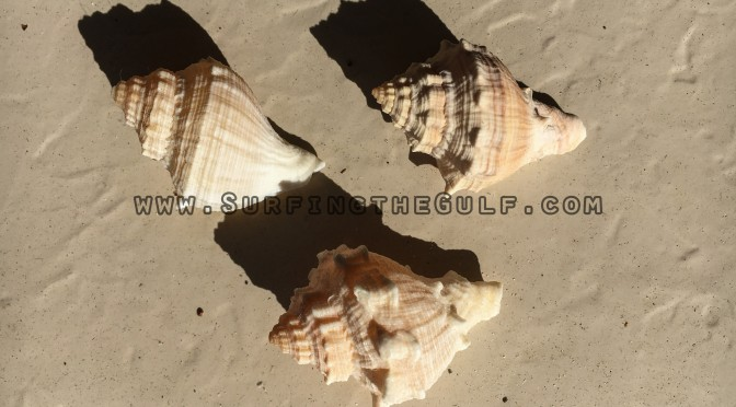 Let's Play Guess That Seashell! – Rental Properties